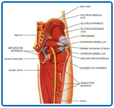 The Benefits Of Remedial Sports Massage Therapy For Piriformis